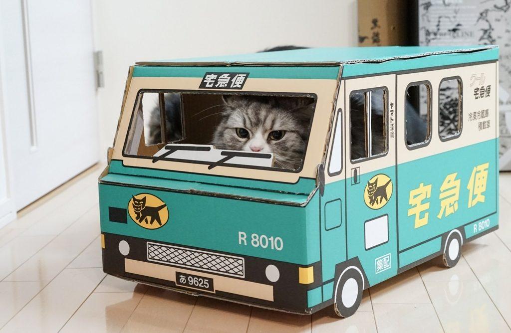 宅急便の柄をした段ボールに入っている猫